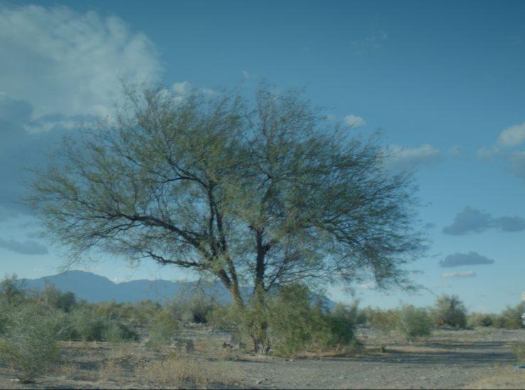 La novia del desierto